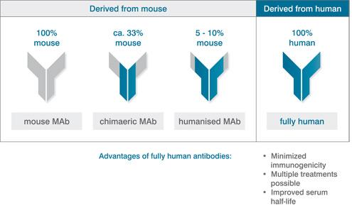human-monoclonal-antibodies.jpg