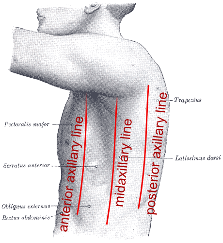 spleen pain location (with pictures) and causes | healthhype, Sphenoid