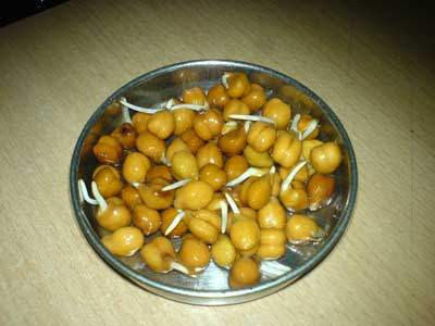 Bengal gram - Chick pea