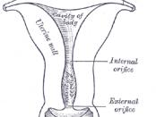 Vagina and Uterus