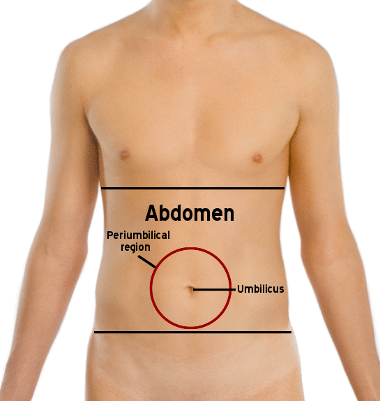 abdomen burning pain causes and symptoms | healthhype, Skeleton