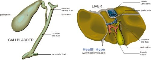 what is bile? production, function, salts, storage, secretion, Human Body