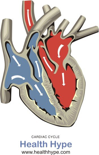 What is Cardiac Output? | Healthhype.com