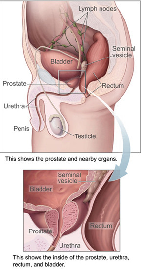 Middle Lobe Prostate http://www.healthhype.com/the-prostate-gland-problems-diseases-tests.html