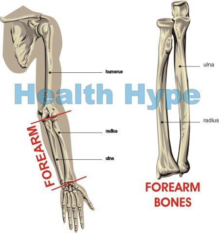 forearm pain (lower arm) causes – muscles, bones, joints, nerves, Cephalic Vein