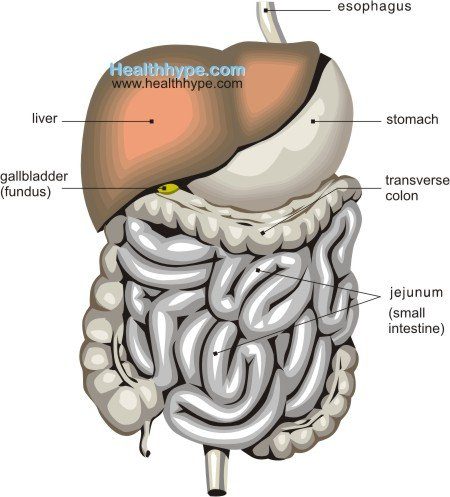 gallbladder location, anatomy, parts, function, pictures, Human Body
