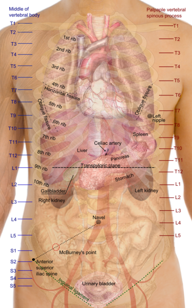 Gallbladder Location