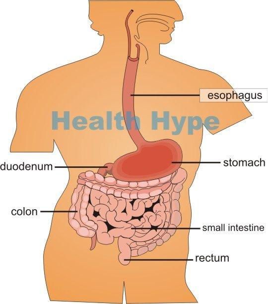 Sensitive Stomach and Bowels Causes, Symptoms and Treatment