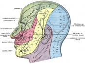 forehead pain