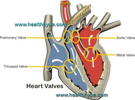 Heart valves mitral tricuspid aortic pulmonary function what are the heart valves ccuart Choice Image