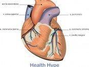 heart_vessels