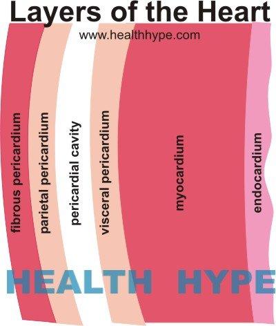 Myocardial Rupture (Heart Muscle Tear) | Healthhype.com