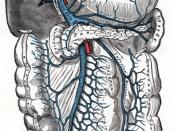 hepatic vein