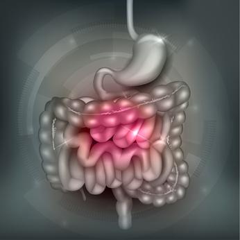 Gastrointestinal tract