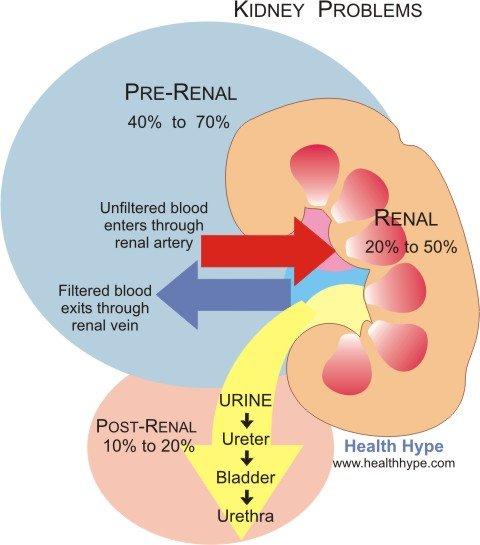 tb adrenal gland