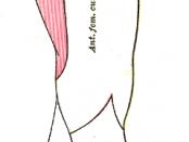 meralgia paresthetica