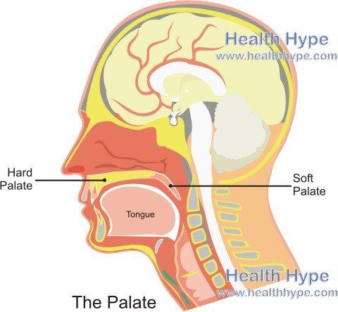 Palates Hard Palate Soft Palate Anatomy And Picture