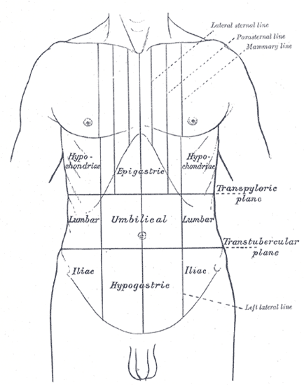 Landmarks of the Abdomen and Abdominal Pain Diagram
