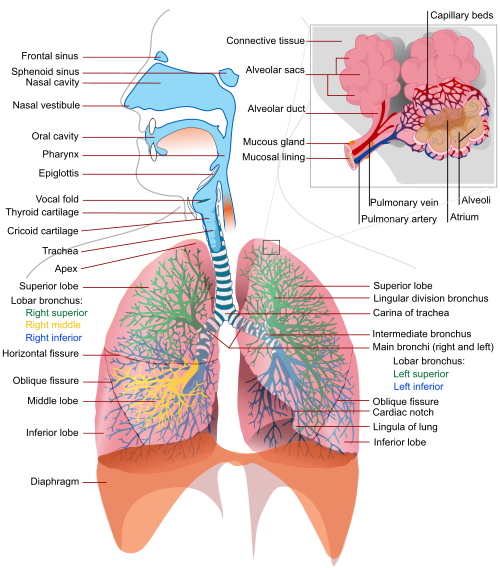 Foreign Body Aspiration (Object Blocking the Airways)