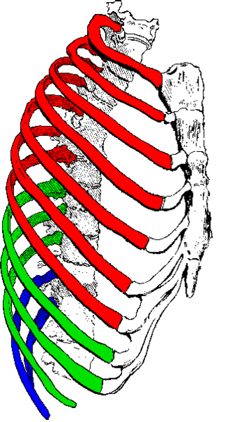 cracked rib referred pain gallbladder