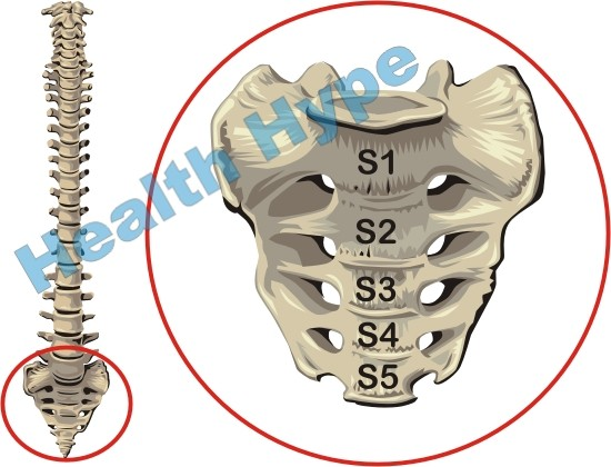 Sacrum and Coccyx (Tailbone) of the Spine Anatomy and Pictures