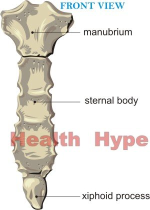 sternum parts