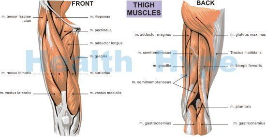 thigh pain symptoms with movement and causes of pain in thighs, Human Body