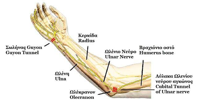 ulnar nerve - photo #2