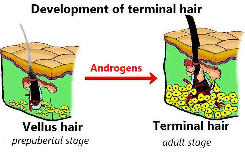 Hair Loss On Legs One Or Both Causes And Treatment