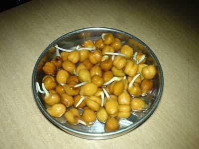 Bengal gram - Chick pea