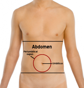 "abdomen ""ancho ="" 284 ""altura = ""300"" srcset = ""http://www.healthhype.com/wp-content/uploads/abdomen-284x300.png 284w, http://www.healthhype.com/wp-content/uploads/abdomen.png 545w"" sizes = ""(max-width: 284px) 100vw, 284px"" /></p><h3><span id="