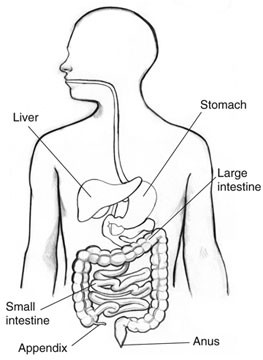 Appendix location