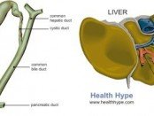 Bile Duct Picture