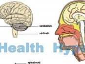 brain_view