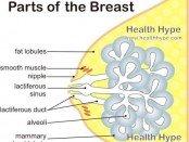 Breast Parts