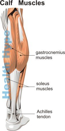 Swollen calf muscles causes of swelling of back of lower leg what is in the back of the lower leg ccuart Images
