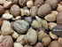 common nuts