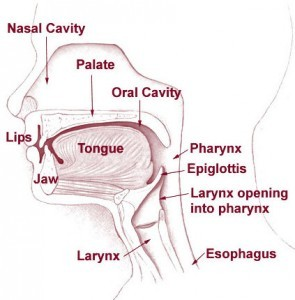 nose, mouth and throat