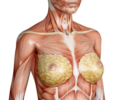 Female Breast Anatomy Function Parts And Pictures Healthhype