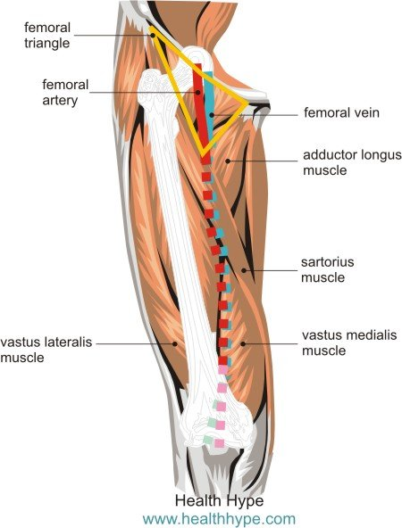 Leg Arteries Thigh Lower Leg Feet Anatomy Names Pictures