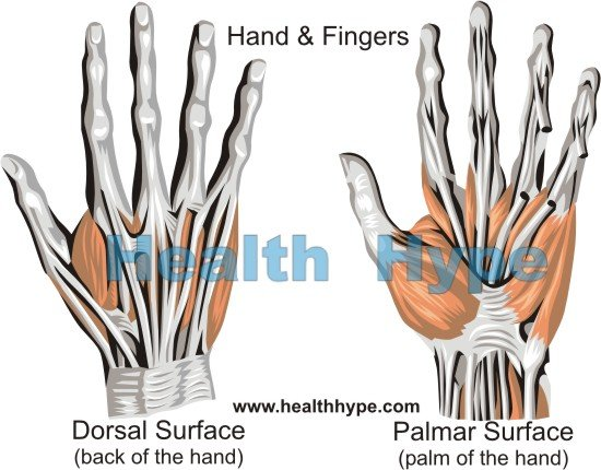 Hand Pain, Causes of Pain in the Palm and Back of Hand | Healthhype.com