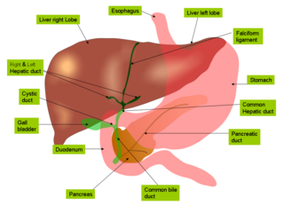 6 Warning Signs Of An Unhealthy Liver Healthhype Com