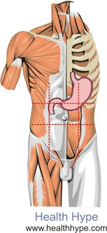 Stomach location anatomical position parts and pictures the ccuart Gallery