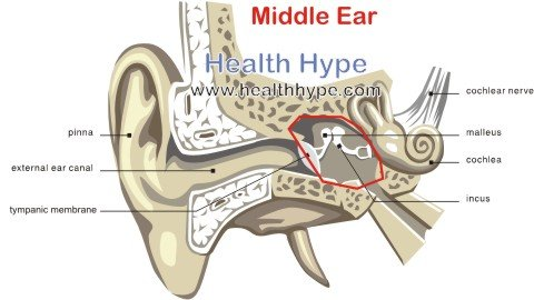 Human Ear – Anatomy, Parts (Outer, Middle, Inner), Diagram ...