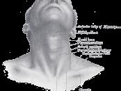 neck_thyroic