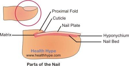 Fingernail Abnormalities, Toenail Disorders, Discolored ...