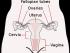 parts of vagina
