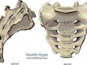 sacrum_bone