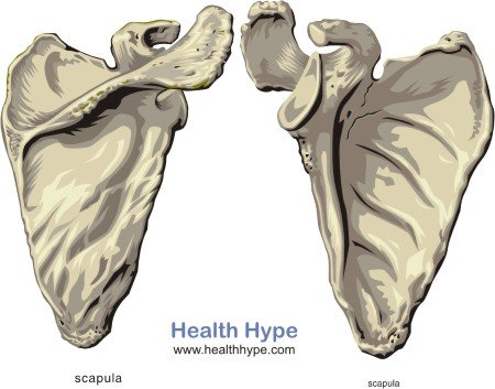 Scapula Pain Causes Of Pain In The Shoulder Blade Healthhype