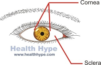 The human eye eyeball diagram parts and pictures healthhype diagram ccuart Images